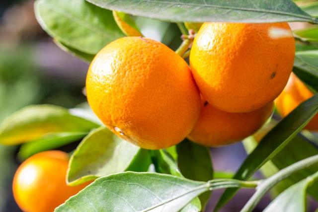 オレンジ油 ドクターシーラボ エンリッチL ウォッシングフォーム