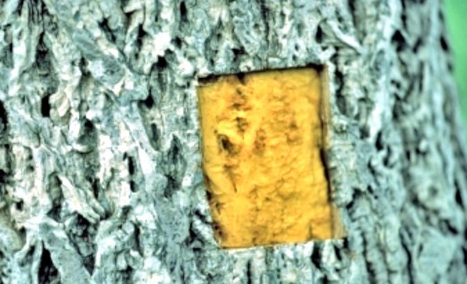 キハダ樹皮エキス ブルークレール リペアモイストWエッセンス