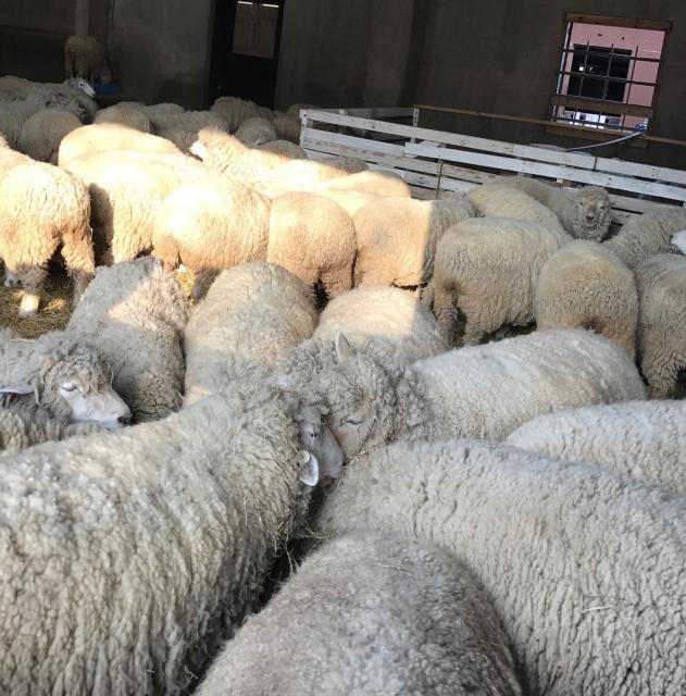 加水分解ケラチン(羊毛) ボタニスト ボタニカルダメージケアシャンプー