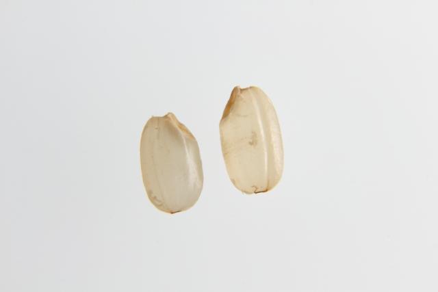 コメ胚芽油 ラサーナ / LaSana 海藻 ヘア エッセンス しっとり