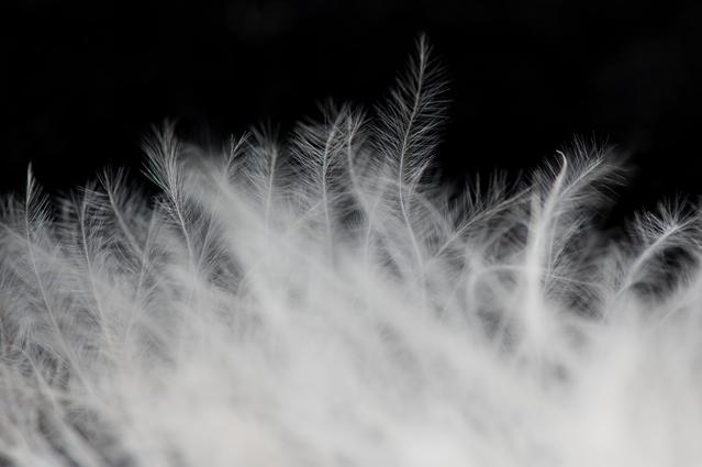 フェザー(羽毛)ケラチンです。髪に弾力をもたらすケラチンの中でも、圧倒的にしなやかで柔らかい質感に仕上げます。髪への吸着力に優れ、バージン毛のような仕上がりを期待。